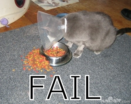 Cat With Cone: Fail
