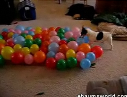 Dog Pops Balloons