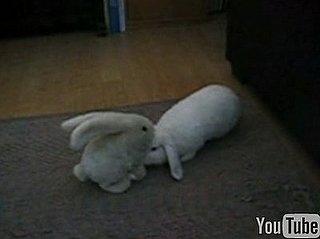 Rabbit Gets a Massage