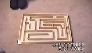 Speedy Hamster Goes Through Maze