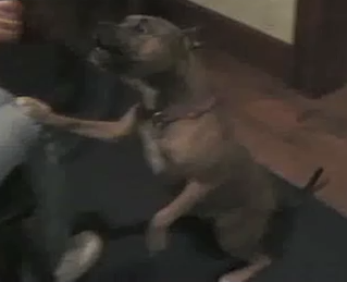 Smart Dog Plays Fetch