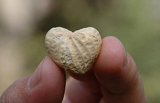 Heart-Shaped Peanuts for Valentine's Day
