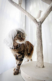 Kitty Wigs: Spoiled Sweet or Spoiled Rotten