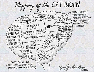 Anatomy of a Cat Brain
