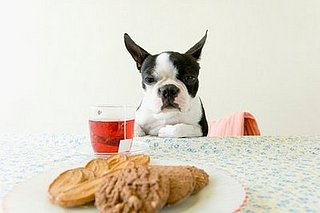 Cookie Recipe for You and Your Little Dog, Too