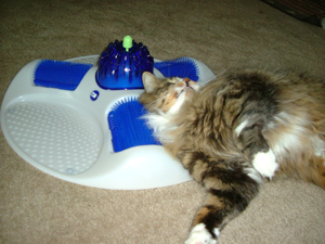 Pampered Pals: Cat Spa