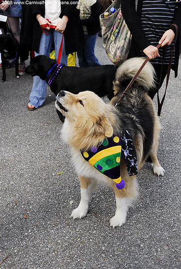 mardi_gras_barkus_parade-005