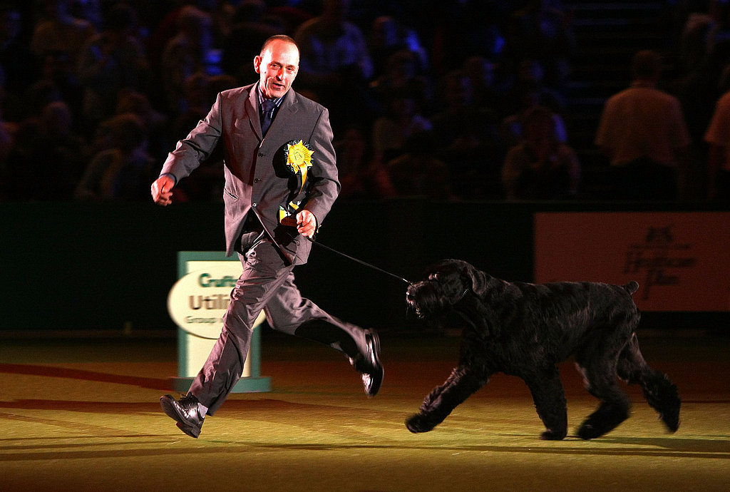 2008 Crufts Winner: Best in Show