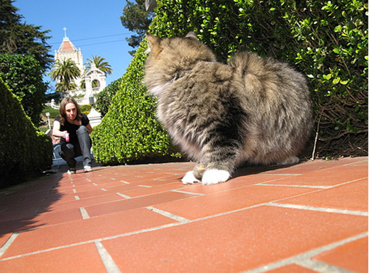 To the Rescue: Kitty's Outdoor Catwalk