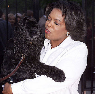So Long, Sweet Sophie: Oprah's Beloved Spaniel Dies