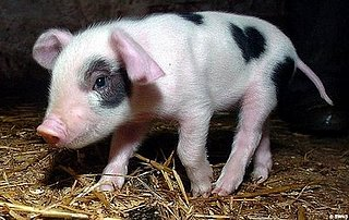 Piglet Born With Cute Heart Spots on His Coat