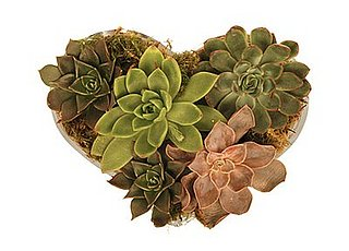 Crave Worthy: Jayson Home & Garden Echeveria Heart