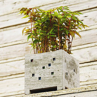 In the Garden:  A Highrise Planter