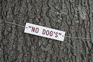 This Tree Belongs to No Dog!