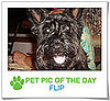 Pet Pics on PetSugar 2009-01-02 09:30:43