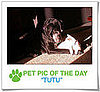 Pet Pics on PetSugar 2009-01-05 09:30:00