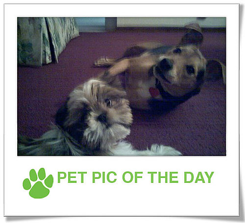 Pet Pics on PetSugar 2009-01-09 09:30:25