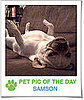 Pet Pics on PetSugar 2009-01-21 09:30:28
