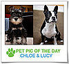 Pet Pics on PetSugar 2009-01-23 09:30:59