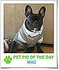 Pet Pics on PetSugar 2009-01-28 09:30:49