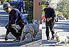 Photos of Matthew McConaughey Out for Jog with His Dog