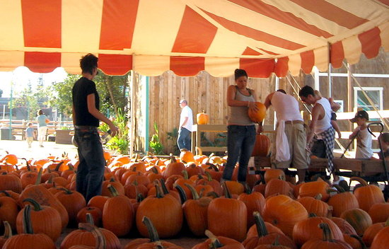Beckhams at the Pumpkin Patch