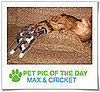 Pet Pics on PetSugar 2008-11-12 09:30:50