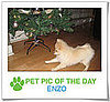 Pet Pics on PetSugar 2008-12-15 09:30:13