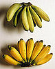 Bananas: Organic vs. Conventional