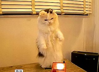 Cute Alert: Cat Plays the Theremin!