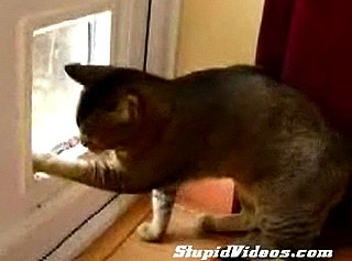 Cat Struggles With Door