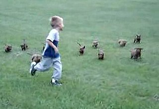 Cute Alert: Puppies Chase Boy
