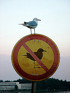Bird Gives Your Sign the Bird