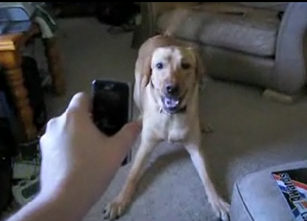 Dog Scared of Phone