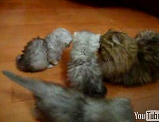 Kittens Look Like Star Trek Tribbles