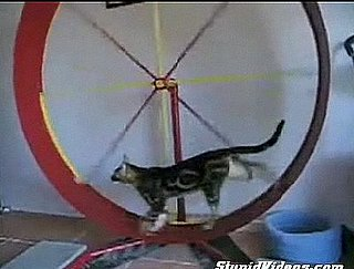 Cats Exercising