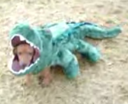 Dog Eaten By an Alligator Costume
