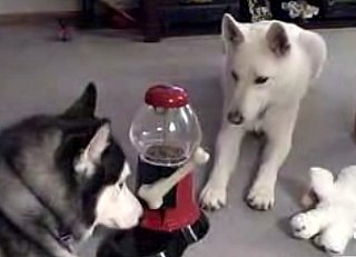 Dog Operates a Gum Ball Machine