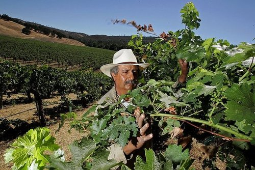 Sonoma and Mendocino Wine Regions Prepare For Dry Spell