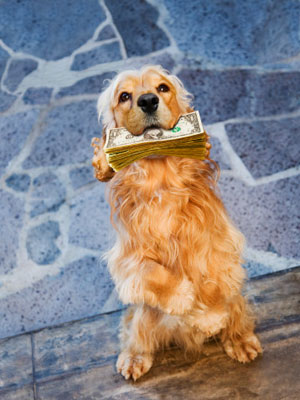 Easy Ways To Save Money on Your Pets
