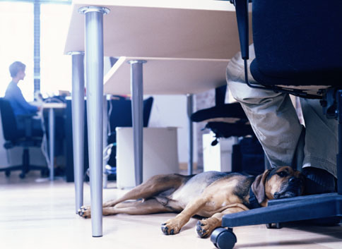 Top Dog Friendly Places to Work