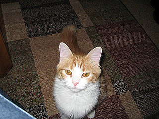 Pet Pics on Petsugar 2008-07-11 08:00:52