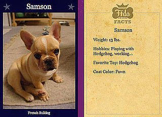 Samson Cute For Worldwide Fidos