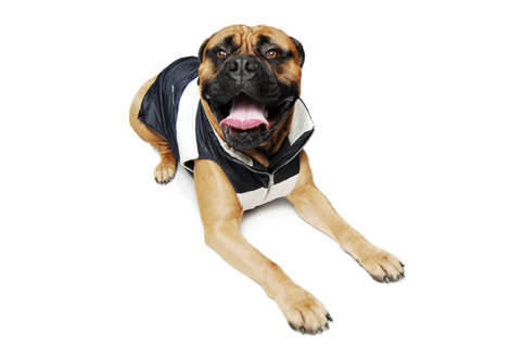 Idawg Bomber Jackets at NY Pet Fashion Week