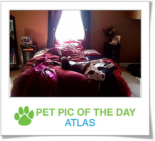 Pet Pics on Petsugar 2008-10-24 07:00:15