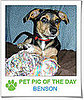 Pet Pics on Petsugar 2008-10-22 07:00:23