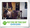 Pet Pics on Petsugar 2008-10-29 07:00:12