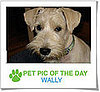 Pet Pics on Petsugar 2008-10-30 08:00:17