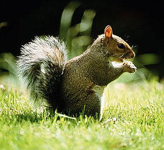 Creature Feature: Squirrel