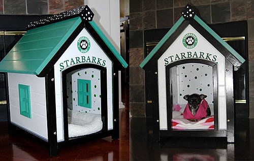 This (New) Home: Starbarks